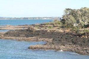 Rangitoto's sharp volcanic rocks that splay into the ocean help trap rubbish.